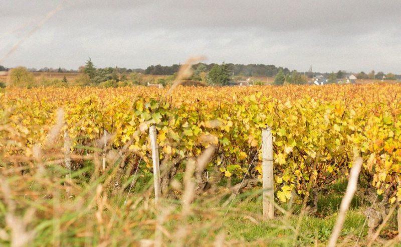 Soirée dégustation de vins de Loire